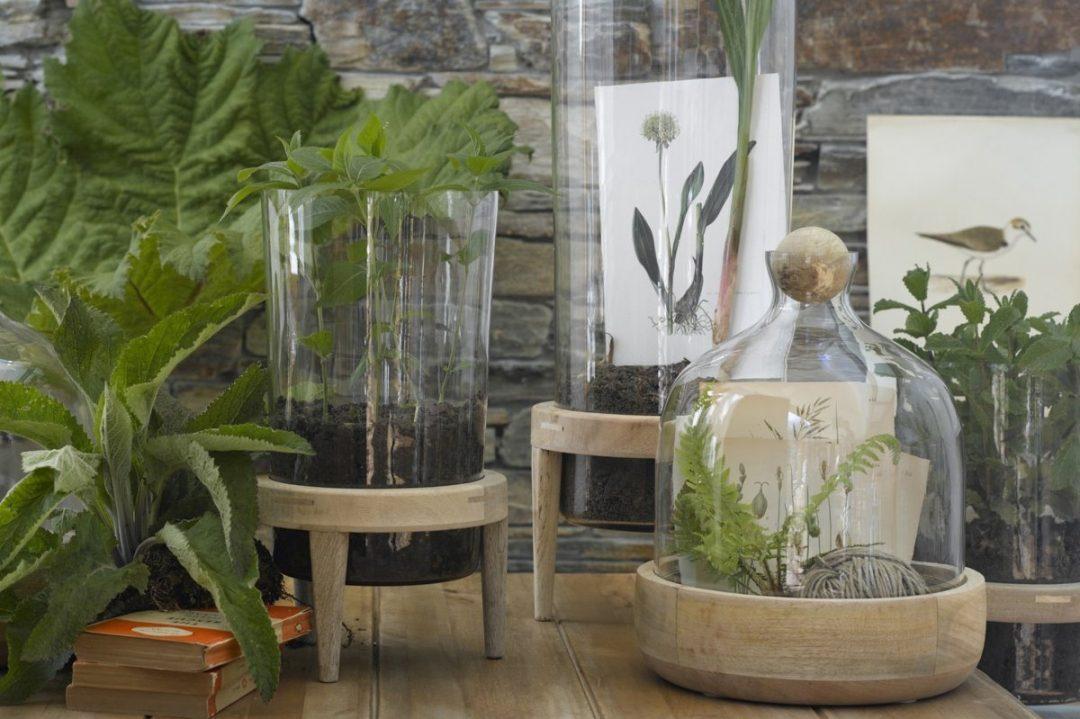 Terrarium en bois brut AM PM