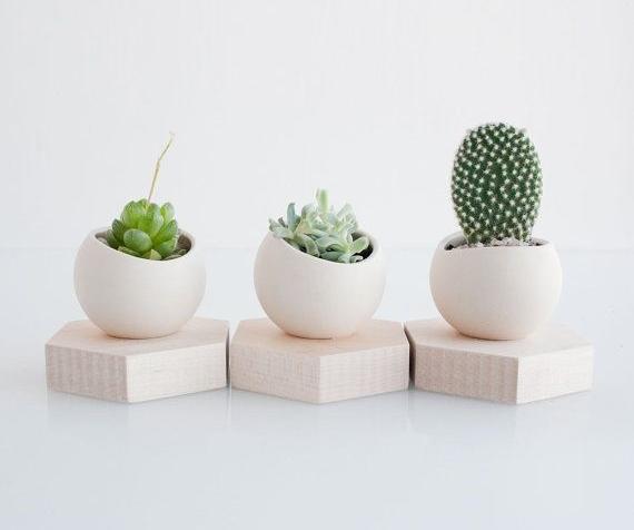 Caches pots pour petits cactus