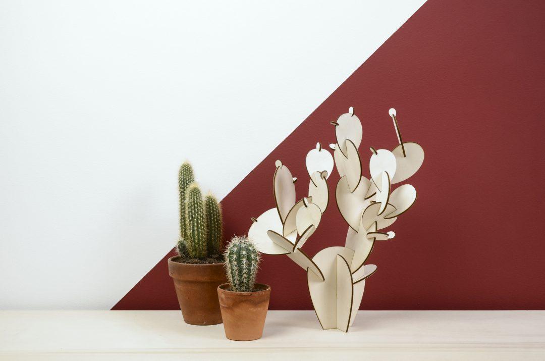 Un cactus parmi les cactus