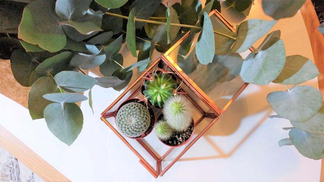 table-vintage-decoration-pimkie-home-cactus-eucalyptus