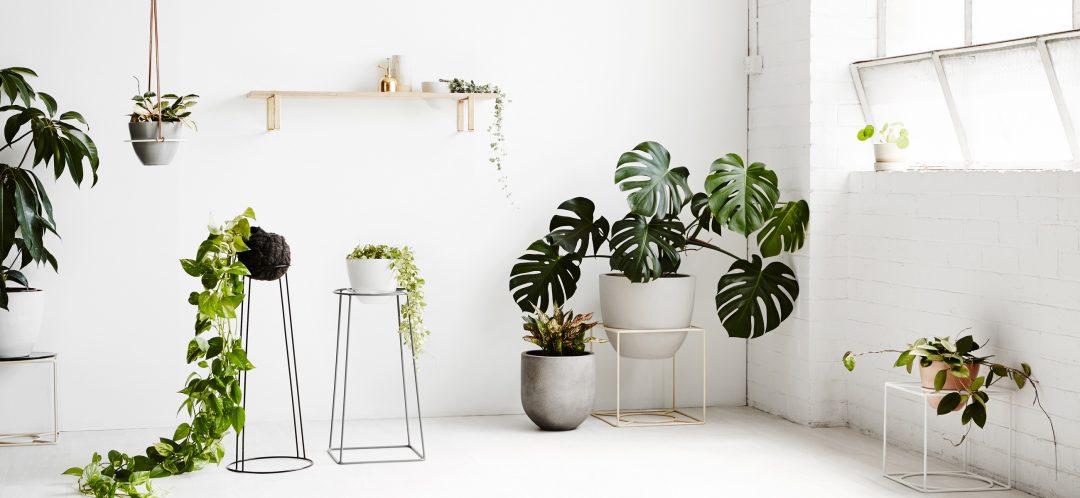 On a craqué sur les structure de Ivy Muse. Une jolie façon de mettre en avant les plantes que l'on affectionne tout particulièrement.