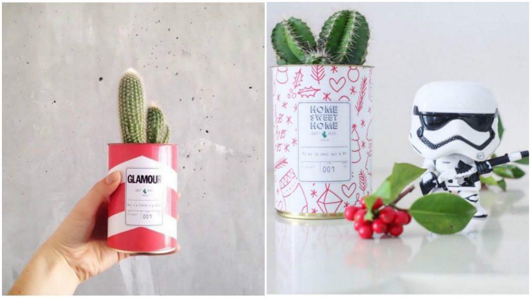 mini cactus pot graphique et coloré - glamour rouge- ay cactus
