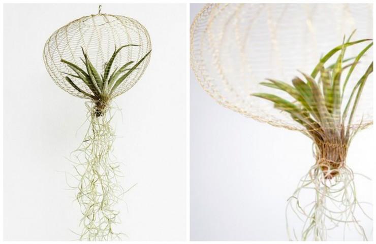 Pour nos jolies plantes - Aventure Deco