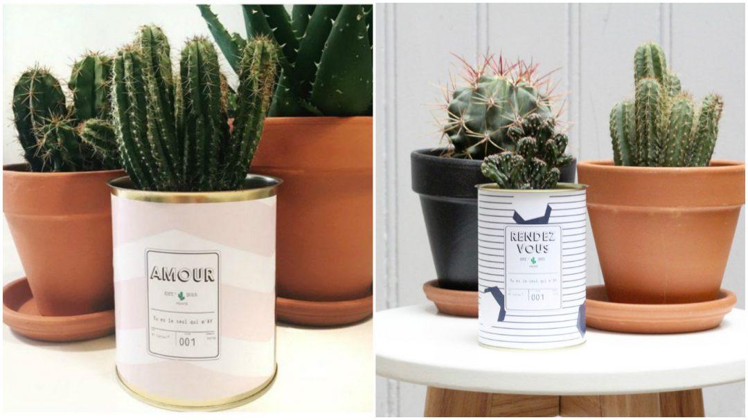mini cactus tendance scandinave pot rose poudre ay cactus