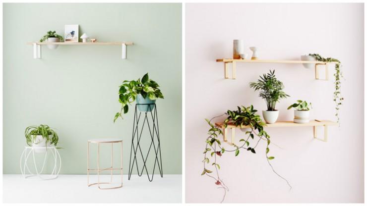 pour nos jolies plantes aventure d co. Black Bedroom Furniture Sets. Home Design Ideas