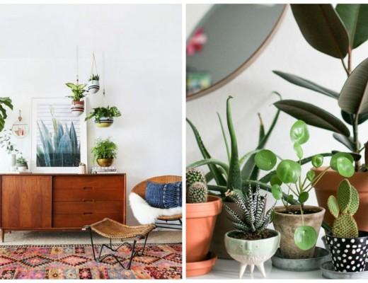 Pour nos jolies plantes - Aventure Déco