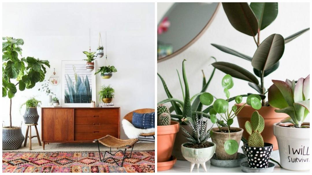Pour nos jolies plantes aventure d co - Plante de salon ...