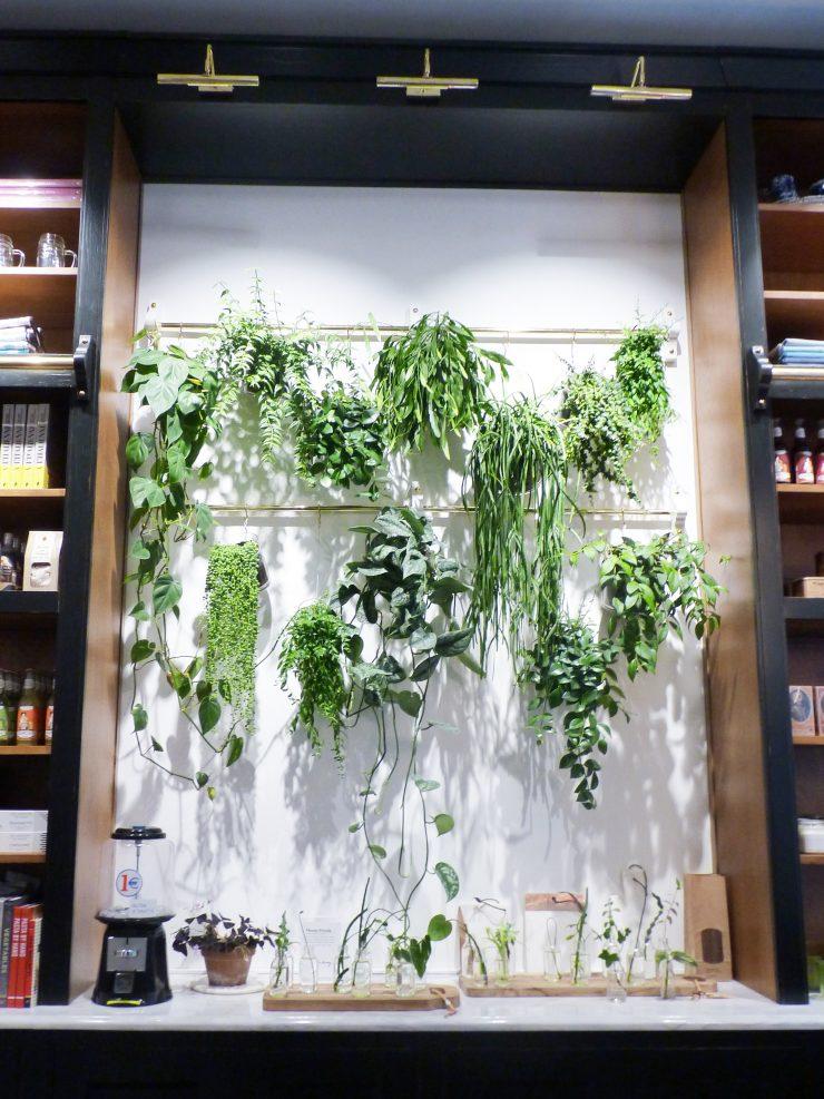 Mise en scène végétale de l'appartement Sézane