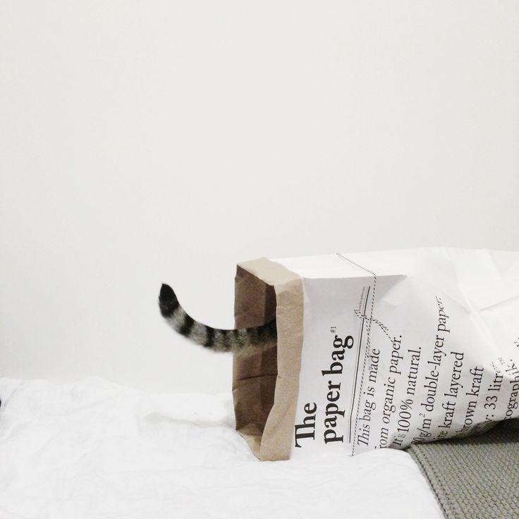 L'indispensable : Le Sac en Papier