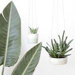 Suspensions pour plantes par Caroline Gomez